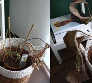 jak dbać o rośliny - Janusz ogrodnictwa